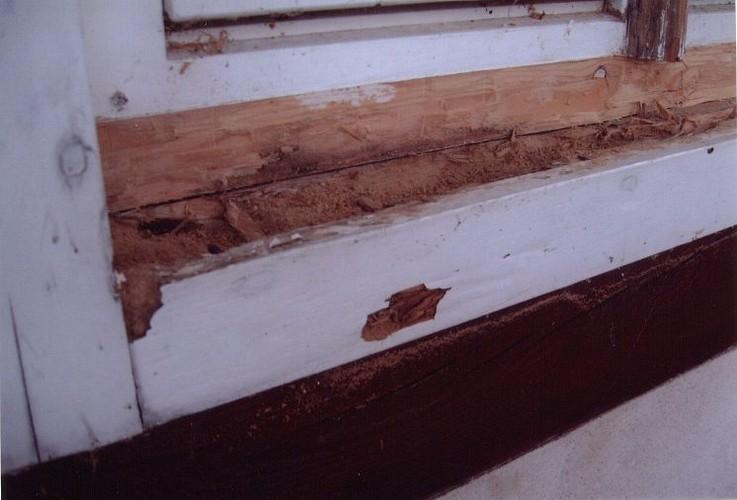 Abraham ingenieurb ro und sachverst ndigenb ro holzpilze for Holzschutzmittel fachwerk